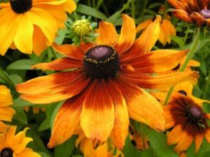 Красивый цветок, выращивание, уход в домашних условиях, фото, описание.