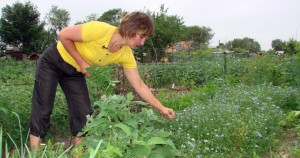 Gardening in July, tips!