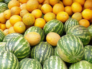 How much and how often you need to water melons and watermelons in the garden