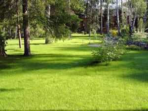 Lawn care, evergreen lawn photo!