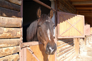 How to keep a horse at home. Conditions for stables, design and photo