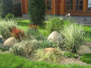Using ornamental grasses and herbs in the landscape design of the garden, photo