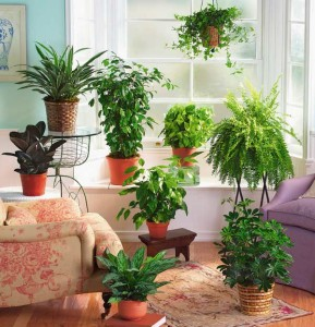 Terms of care for plants, photos, description