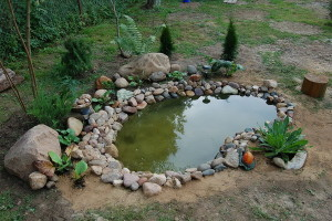 How to make a small pond at the cottage in the yard with his hands, photo