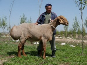 Breed description, photo, characteristic for home breeding