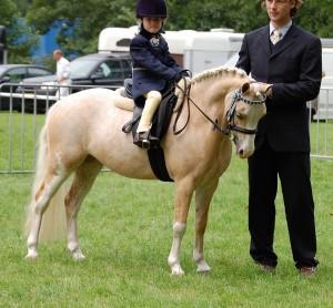 Фото, опис уельської породи поні, характеристика для домашнього розведення.