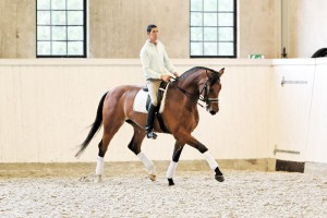 Photos, description Salerno horse breed, characteristics, growth and breeding