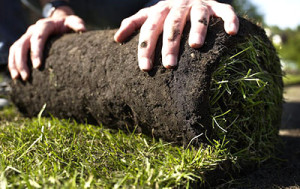 Laying sod on the lawn, the description and photo