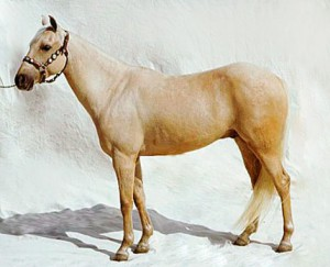 Photos, description breeds of horses in Galicia, characteristic for home breeding and maintenance