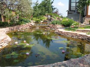 Construction of cottage and garden ponds, description and a photo