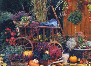Care and planting in the garden in autumn, photo