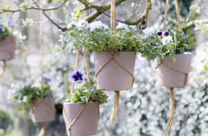 Planting plants in hanging baskets, description and a photo