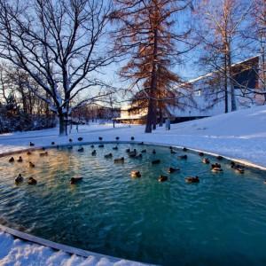 Зимовка пруда, подготовка домашнего пруда к зимовке, описание и фото.