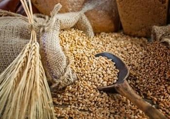Полезные свойства пшеницы