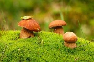 собираемся по грибы