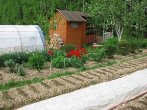 Организация садово-огородного участка