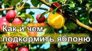 Чем удобрять яблоню весной