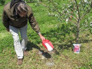 как подкормить яблоню