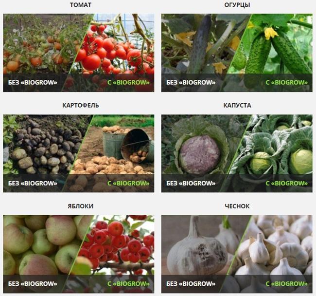 биогров фото до и после