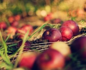 яблука обпадають, причини