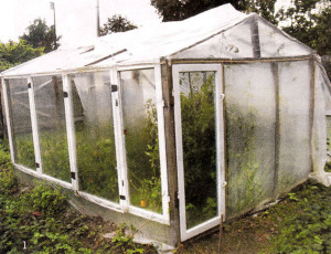 Hotbeds of old window frames photo, from the windows of a greenhouse with their hands in the country, how to make a small greenhouse for tomatoes, a greenhouse of the windows with their hands, how to build a greenhouse on the site under the seedlings guide - how to make a greenhouse