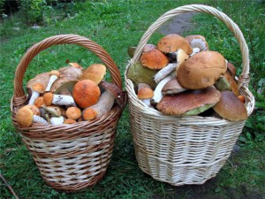 Useful information about mushrooms. All you need to know as a new mushroomer