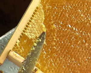Tips experienced beekeepers, tips experienced beekeeper beginners