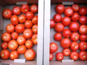 How to store tomatoes (tomatoes). Storage temperature tomatoes. What is the best and where to store for a long time the tomatoes at home or in the refrigerator