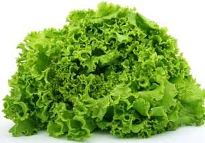 Lettuce, benefit and harm. The therapeutic properties of lettuce, from what helps. Tips folk medicine. Photos and descriptions