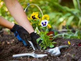 Секрети садівництва для любителів і початківців