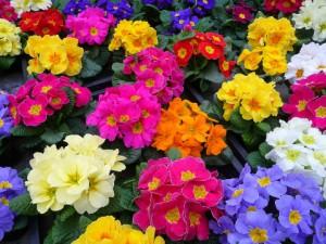 How does it look, photos, description. We grow in the garden area. All secrets