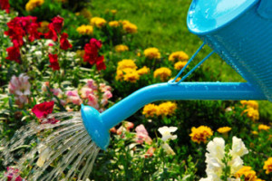 Care for flower beds and flowers in July