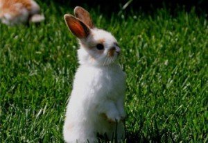 What vitamins are needed for rabbits and dosage orally, a list description