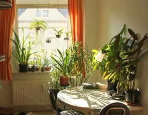 A perfect day to buy potted plants, flowers, vases in the house. Lunar calendar and counselor