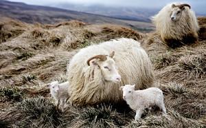 Photos, breed description, characteristics for breeding at home