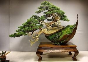 Small tree at home - Bonsai, photo, history