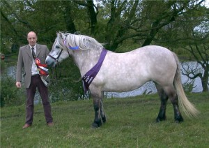 Фото, опис коня Хайленд або Шотландський гірський поні, характеристика для домашнього розведення.