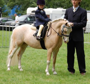 Photos, description Welsh pony breed, characteristic for home breeding