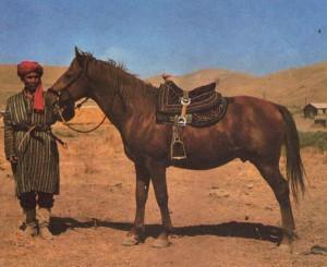 Фото, опис коня породи Карабаірска, характеристика, розведення.