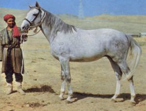 Photos, description Lokayskaya horse breed characteristics for breeding