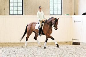 Фото, опис коня породи Салерно, характеристика, зростання, розведення.