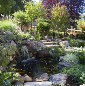 Creating a rock garden with his own hands, schemes, types and photos