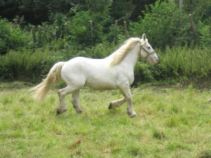 Photos, description Bardidzhano horse breed, characteristic for home breeding and maintenance