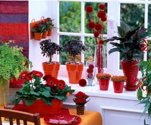 Plant design at home