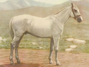 Photos, description Iomudskaya horse breed, characteristic for home breeding and maintenance
