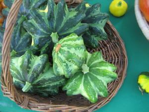 Planting squash open field cultivation, description, photos and care