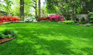 Methods of seeding grass, care, technology and photo