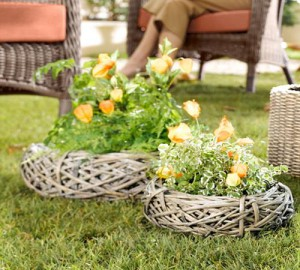 Planting in a basket made of wire, description and a photo