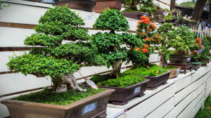 Terms of light modes for growing bonsai, light technology, a description and photo