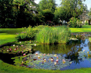 Garden in the swamp, the description and photo
